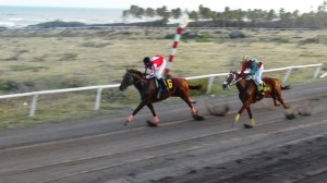 Scenes from horse race