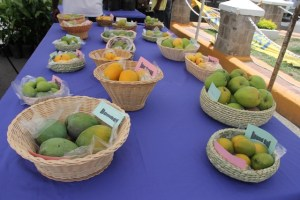 A variety of mangoes from Nevis on display in Charlestown at Mango Fest 2014 (file photo)