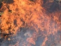 marijuana-burn-september-30