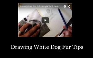 Drawing White Dog Fur Tips