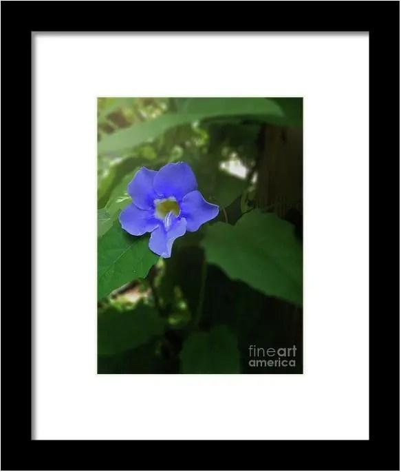 Bengal Trumpet Flower Blue Tones