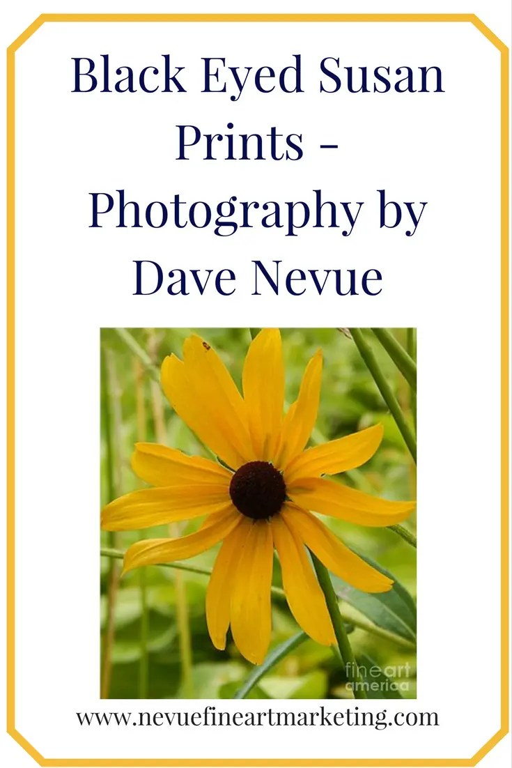 Black Eyed Susan Prints. Purchase art prints, canvas prints, framed prints, greeting cards and more. Reference images for visual artists.