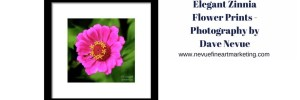 Elegant Zinnia Flower Prints – Photography by Dave Nevue