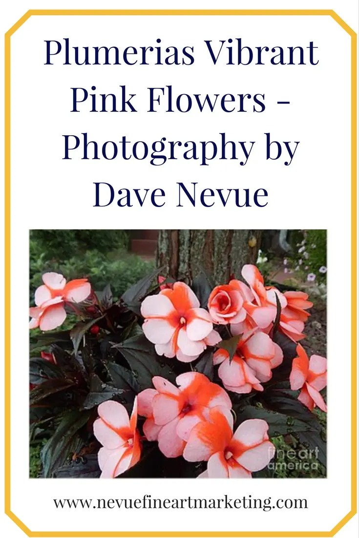 Plumerias Vibrant Pink Flowers - Photography by Dave Nevue Purchase art prints, canvas prints, framed prints, greeting cards and more.