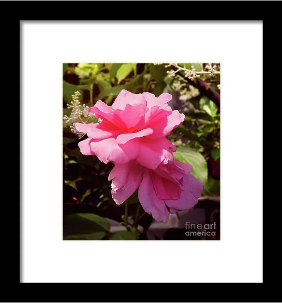 Reaching For The Sky Wild Rose Prints