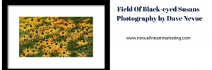 Field Of Black-eyed Susans – Photography by Dave Nevue