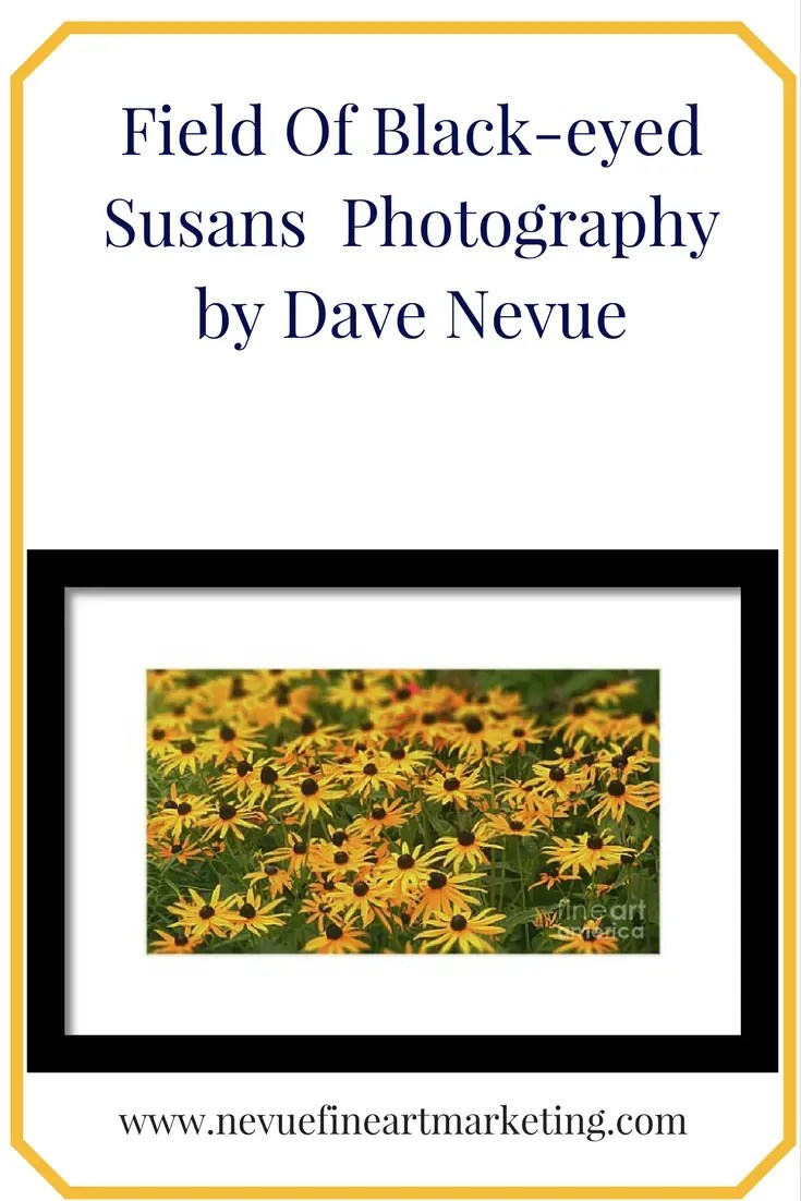 Field Of Black-eyed Susans - Photography by Dave Nevue. Purchase prints and greeting cards.
