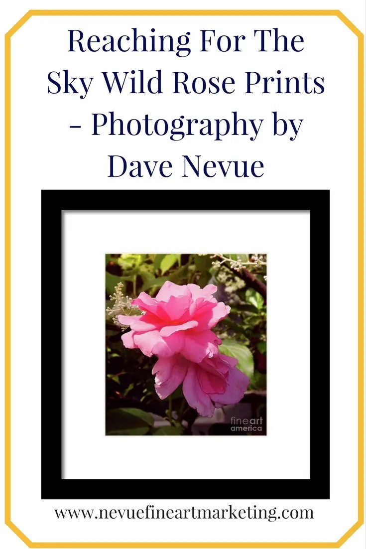 Purchase Prints - Reaching For The Sky Wild Rose Prints - Photography by Dave Nevue