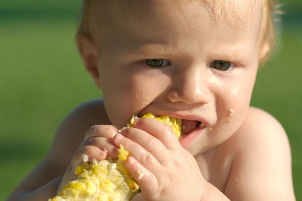 teething baby eating corn on the cob
