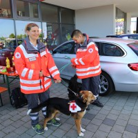 07-05-2014-memmingen-unterallgaeu-brk-rettungshundestaffel-ausbildung-kino-poeppel-new-facts-eu20140607_0008