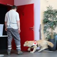 07-05-2014-memmingen-unterallgaeu-brk-rettungshundestaffel-ausbildung-kino-poeppel-new-facts-eu20140607_0014