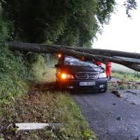 Filzingen-Baum-wis-30-06-14-003