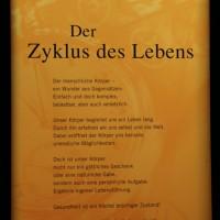 02-07-2014-muenchen-ausstellung-koerperwelten-hagen-poeppel-new-facts-eu (5)