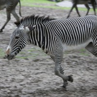 17-06-2015_Tierbilder_Augsburger-Zoo_Poeppel_new-facts-eu0087