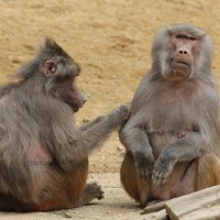 17-06-2015_Tierbilder_Augsburger-Zoo_Poeppel_new-facts-eu0137