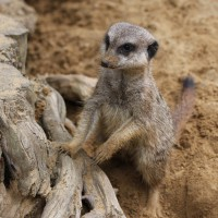 17-06-2015_Tierbilder_Augsburger-Zoo_Poeppel_new-facts-eu0201
