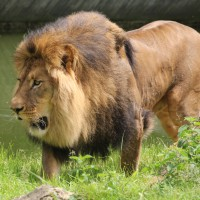 17-06-2015_Tierbilder_Augsburger-Zoo_Poeppel_new-facts-eu0219