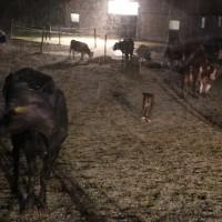 02-01-2016_Unterallgaeu_Gernstall_Mindelheim_Brand_Bauernhof_Feuerwehr_Poeppel_new-facts-eu0066