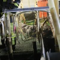 20170309_Biberach_Ringschnait_Brand_Schweinezucht_Feuerwehr_Poeppel_0047