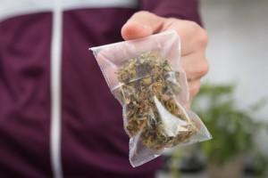 Cannabis Marihuanna Tuetchen