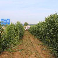 22.07.2019 Unfall LKW A96 Mindelheim Stetten (14)