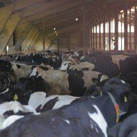 2019-08-09_Unterallgaeu_Groenenach-Tal_Miclhbetrieb_Landwirtschaft_Tierschutz_Polizei_Durchsuchung_Poeppel_0010