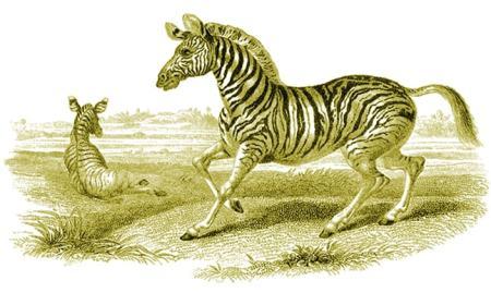 prey animal