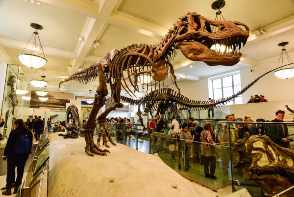 The New York FREE museums cultural centers zoos