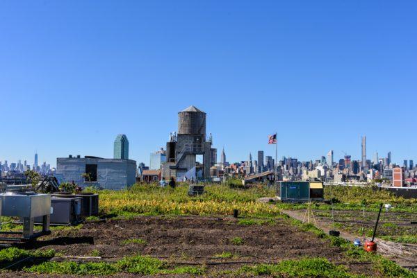 brooklyn grange an alternative