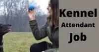 Kennel Attendant Job