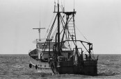 The stern trawler is equipped with large spools, placed directly to the stern, which haul in the nets. Doors are used to sink and spread the nets. Photo by Joseph Thomas