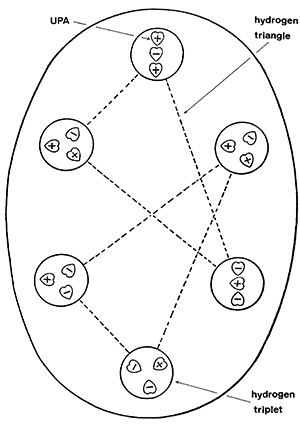 """Figure 1. The hydrogen """"micro-psi atom."""" The UPAs are the heart-shaped objects designated a plus or minus sign denoting either an inflow (minus) or outflow (plus) of energy. Stephen M. Phillips argues that each triangle is a single hydrogen nuclei and that the micro-psi observation has somehow bonded two together. The mid-sized circles are therefore quarks, and the heart-shaped entities sub-quarks. (Source: Occult Chemistry by Annie Besant and C.W. Leadbeater.)"""
