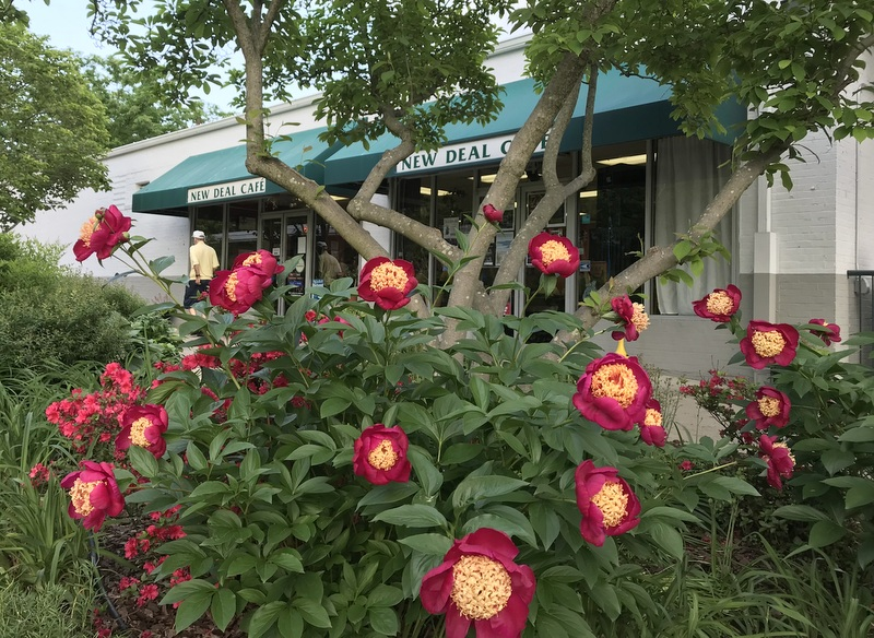 Peonies in front of the cafe