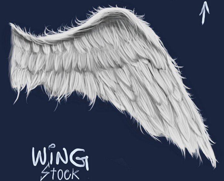 19 White Wings PSD Images White Wing DeviantART Awesome