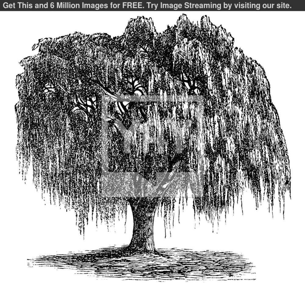 medium resolution of 13 willow tree vector images willow tree silhouette clip weeping willow tree