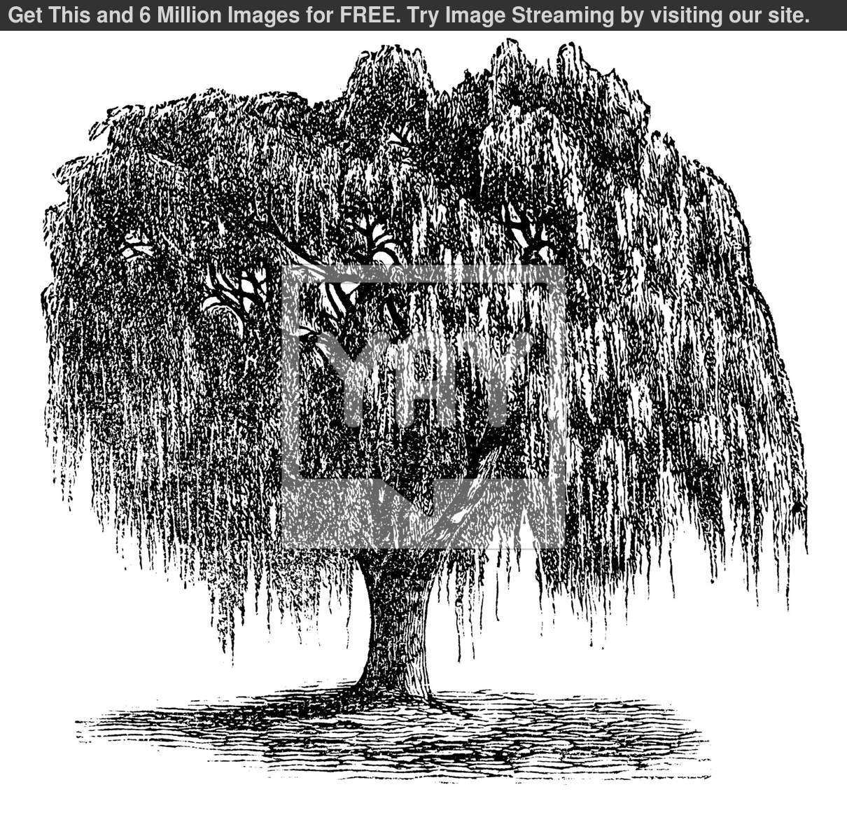 hight resolution of 13 willow tree vector images willow tree silhouette clip weeping willow tree