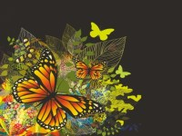 16 Vector Colorful Butterflies Wallpaper Images - Colorful ...