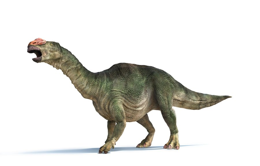 Muttaburrasaurus Facts And Pictures
