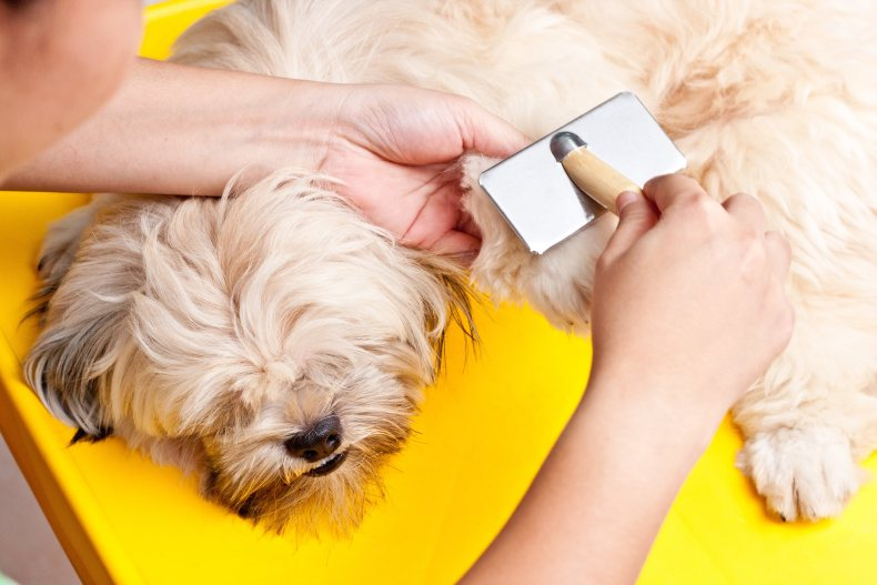 brush your dogs hair - nails photo 3