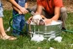 Best Dog Shampoo; Dog Shampoos That Offer Solutions