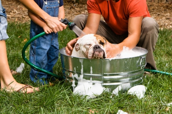 Best Dog Shampoo; Dog Shampoos That Offer Solutions