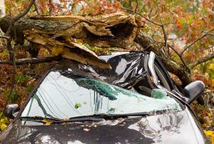 Tree Fall on Car