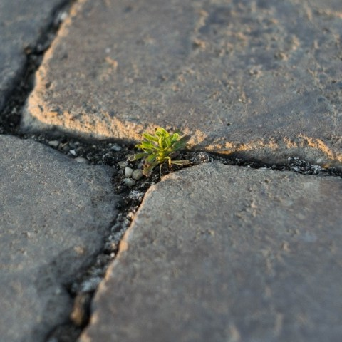 Plant growing between pavers, Budapest, Hungary