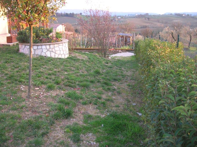 Basilico