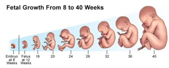 """""""fetus"""" ile ilgili görsel sonucu"""