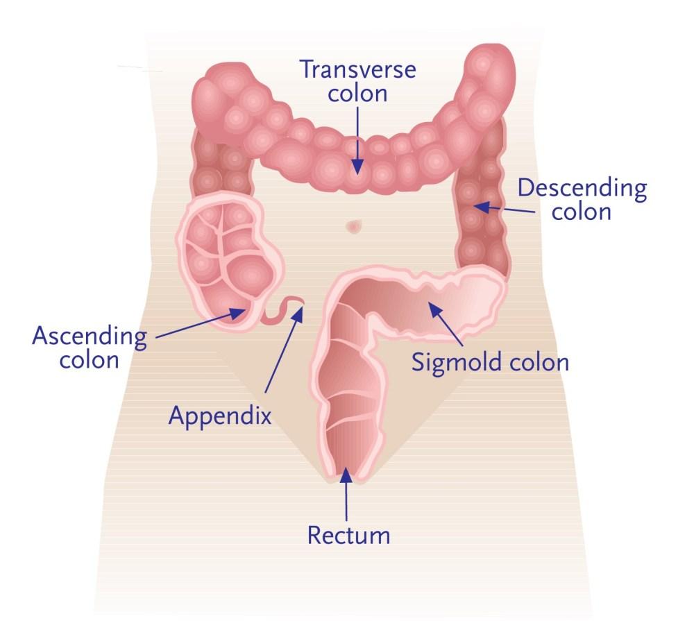 medium resolution of wallace davis digestive