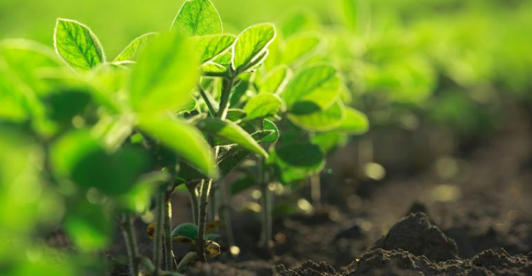 organic agriculture climate change