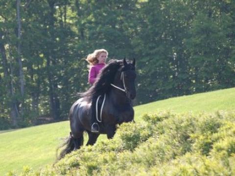 Hillside Equestrian Farm Horse Boarding Farm In Auburn