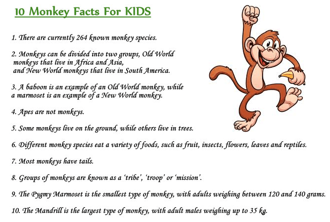 Weird Monkey Facts For Kids - Interesting Facts