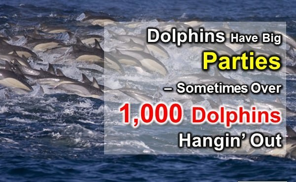 Dolphin Facts: 10 WTF Fun facts about Dolphins | Interesting Facts